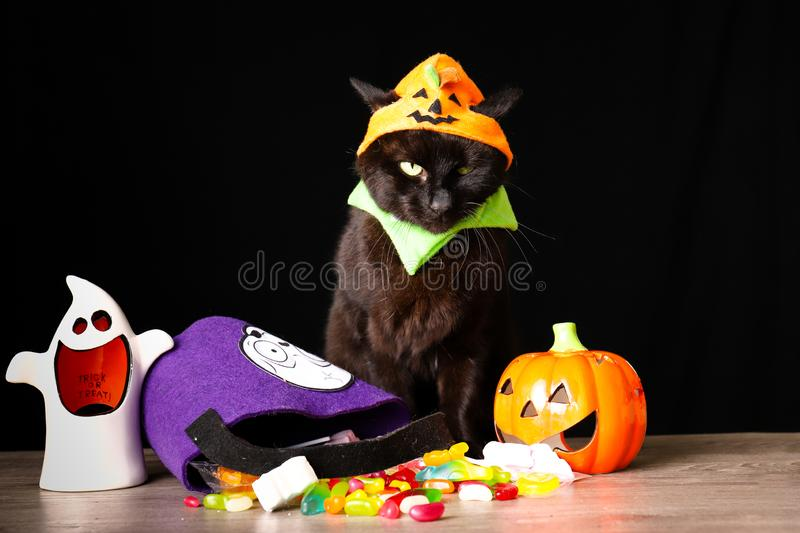 Black cat dressed as a Jack o Lantern stands on top of a wooden table next to Halloween candy against a black background. A black cat dressed as a Jack o Lantern royalty free stock photo