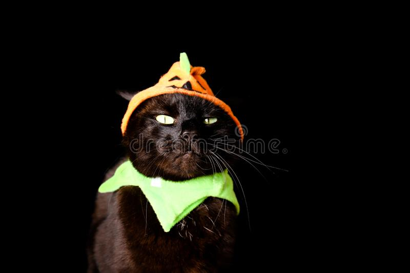 Black cat dressed as a Jack o Lantern stands on top of a wooden table next to Halloween candy. A black cat dressed as a Jack o Lantern stands on top of a wooden stock photography