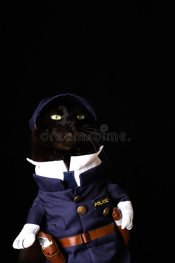 Black cat dressed as a police officer against a black background. A black cat dressed as a police officer against a black background royalty free stock image