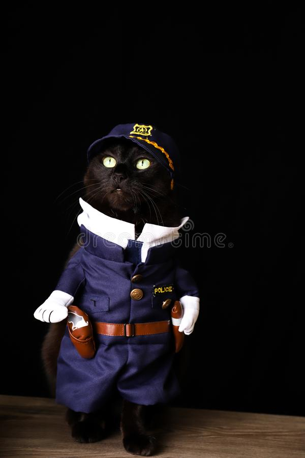 Black cat dressed as a police officer against a black background. A black cat dressed as a police officer against a black background stock image