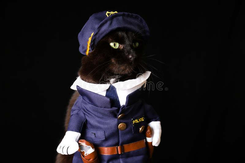 Black cat dressed as a police officer against a black background. A black cat dressed as a police officer against a black background stock photos