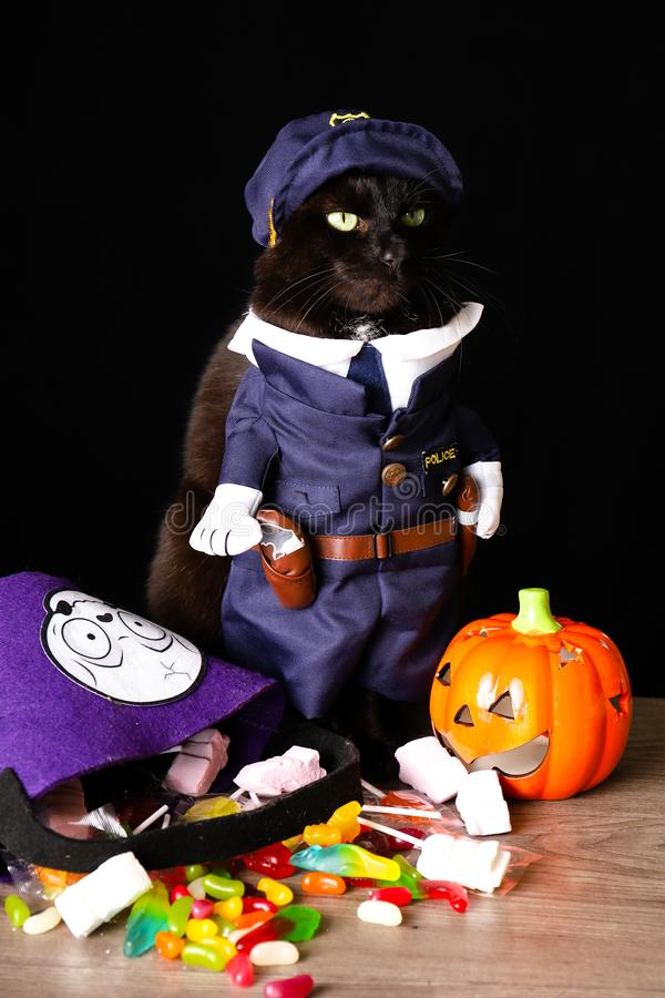 A black cat dressed as a police officer stands on top of a wooden table next to Halloween candy. Against a black background stock photography