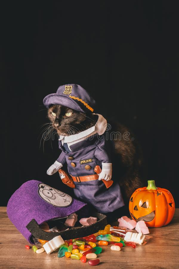 A black cat dressed as a police officer stands on top of a wooden table next to Halloween candy. Against a black background royalty free stock image