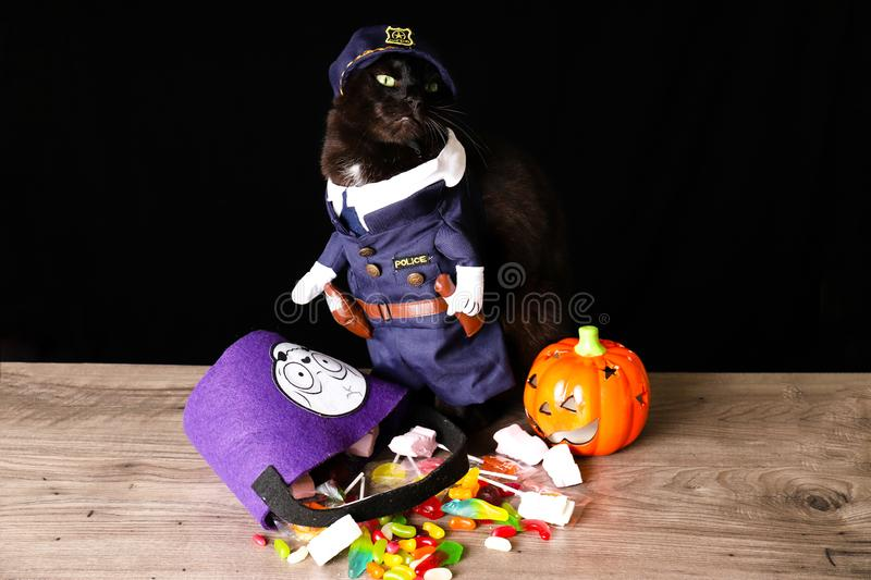 A black cat dressed as a police officer stands on top of a wooden table next to Halloween candy. Against a black background stock photos