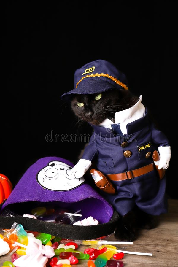 Black cat dressed as a police officer stands on top of a wooden table next to Halloween candy. A black cat dressed as a police officer stands on top of a wooden royalty free stock photo