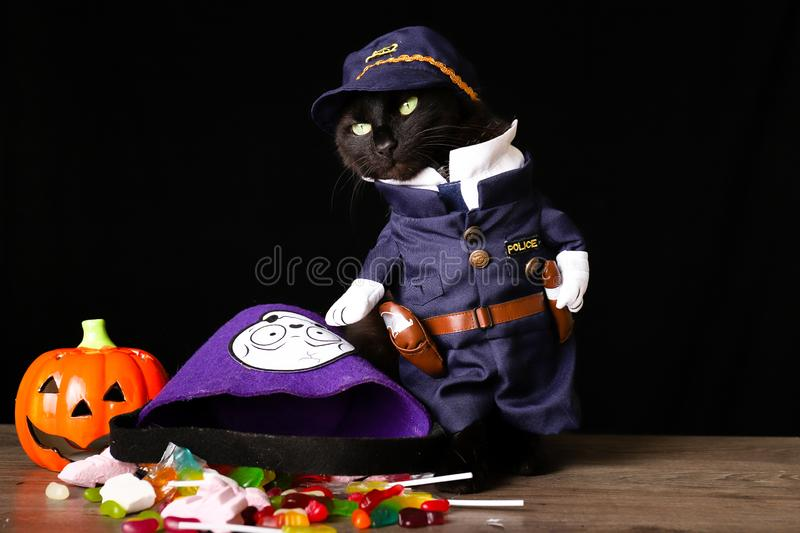 Black cat dressed as a police officer stands on top of a wooden table next to Halloween candy. A black cat dressed as a police officer stands on top of a wooden royalty free stock photography
