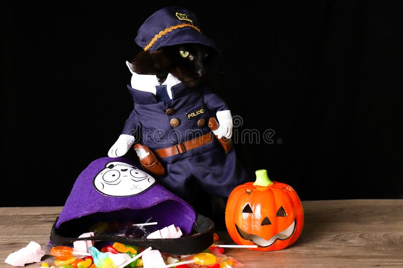 Black cat dressed as a police officer stands on top of a wooden table next to Halloween candy. A black cat dressed as a police officer stands on top of a wooden stock photos