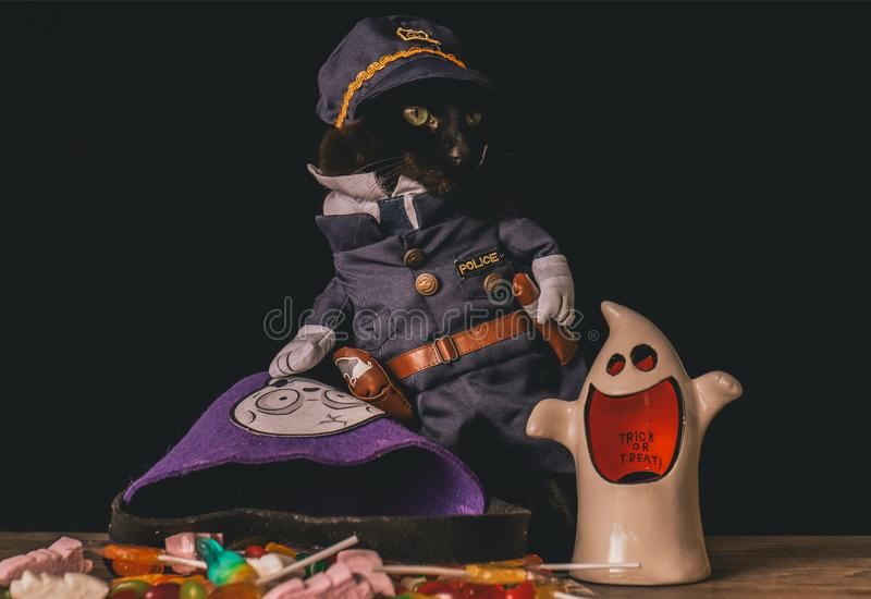 Black cat dressed as a police officer stands on top of a wooden table next to Halloween candy. A black cat dressed as a police officer stands on top of a wooden royalty free stock images