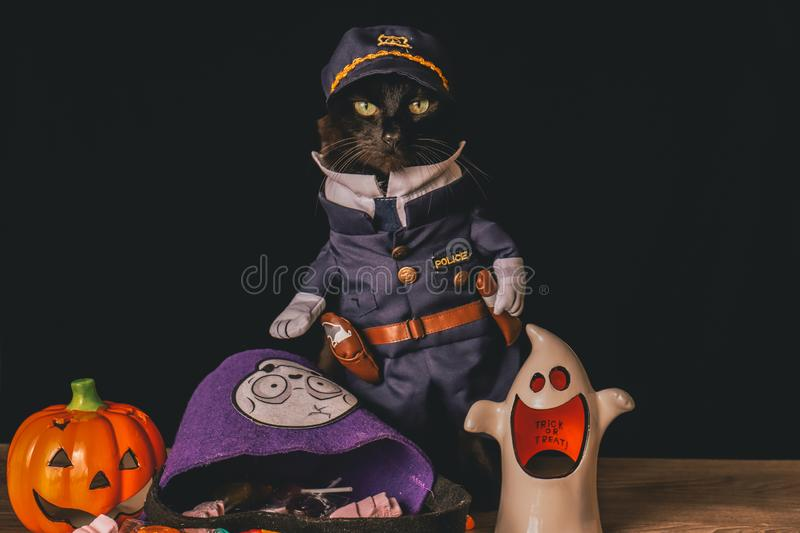 Black cat dressed as a police officer stands on top of a wooden table next to Halloween candy. A black cat dressed as a police officer stands on top of a wooden royalty free stock image
