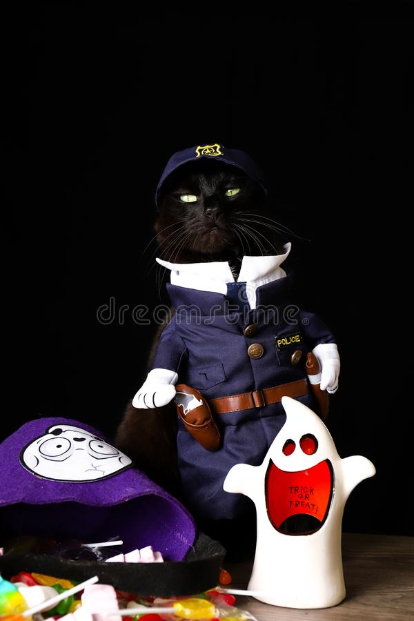 Black cat dressed as a police officer stands on top of a wooden table next to Halloween candy. A black cat dressed as a police officer stands on top of a wooden stock image