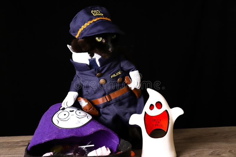 Black cat dressed as a police officer stands on top of a wooden table next to Halloween candy. A black cat dressed as a police officer stands on top of a wooden stock photography