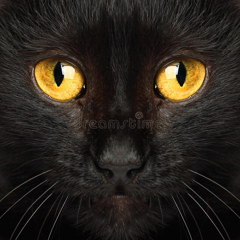 Black cat eyes macro royalty free stock image