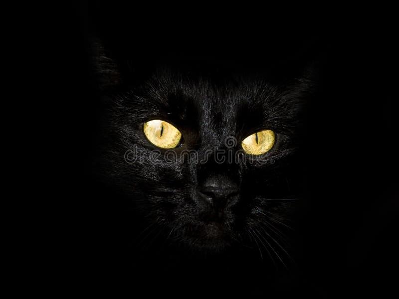 Download Black cat eyes yellow stock image. Image of glowing, dark - 10042639