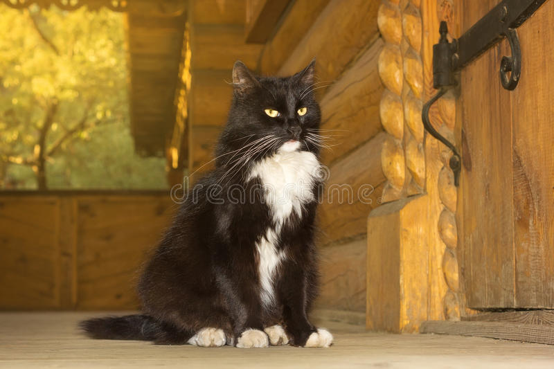 Black cat from a fairy tale. The photo depicts a black cat from a fairy tale stock photography