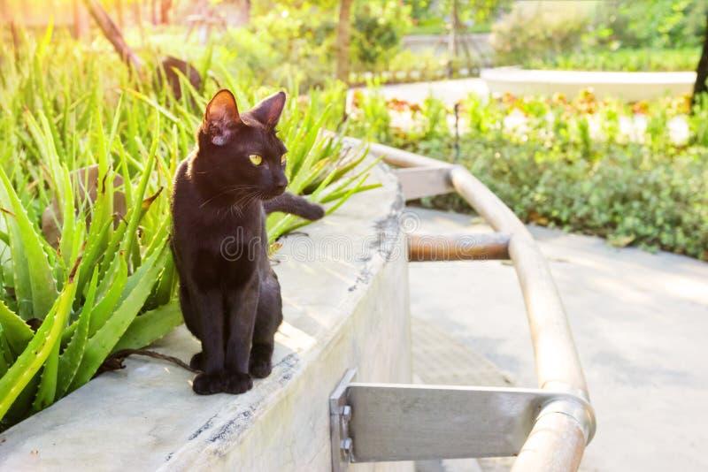 Black cat in the garden.  stock photo