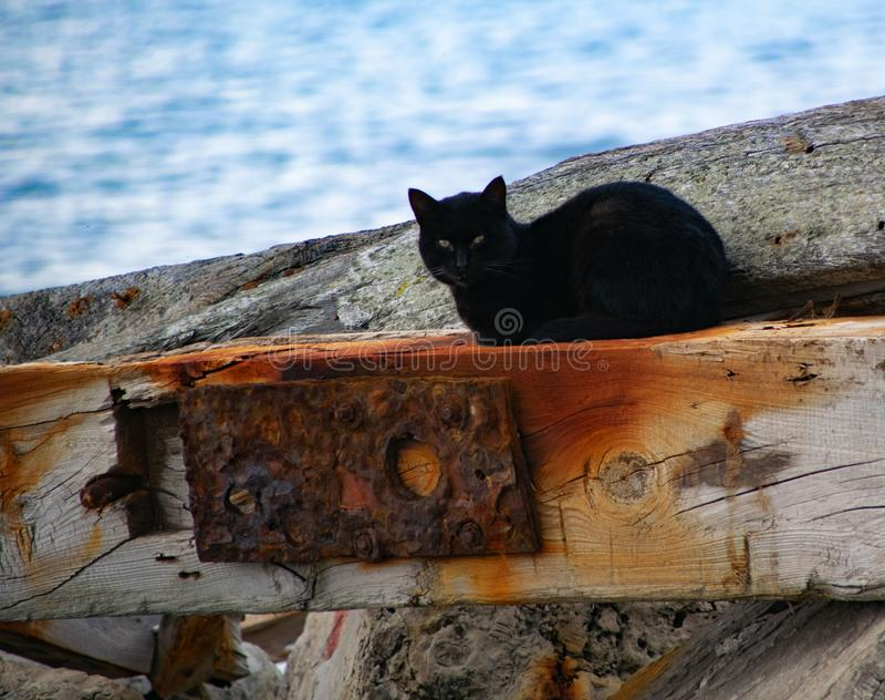 Black cat, gatto nero royalty free stock photo