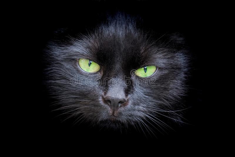 Black cat with green eyes royalty free stock photos