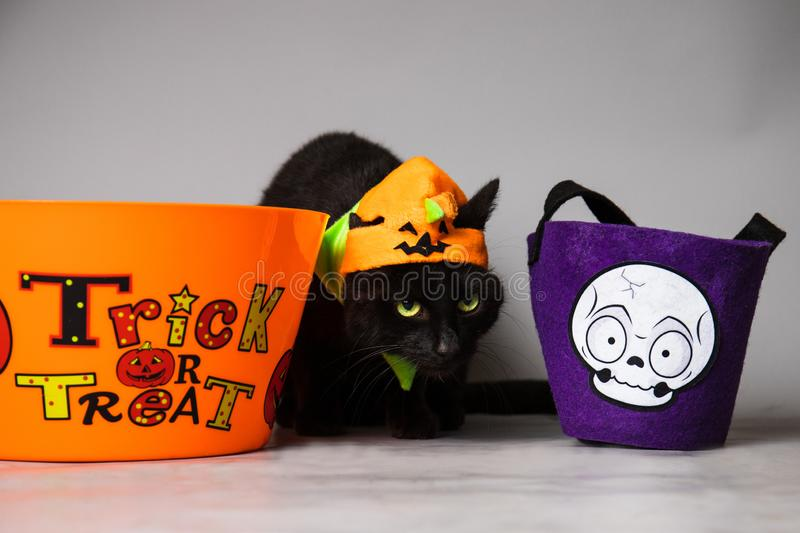 Black cat with green eyes dressed with a jack o lantern head piece against a seamless background between a bag and trick or treat. A black cat with green eyes royalty free stock photo