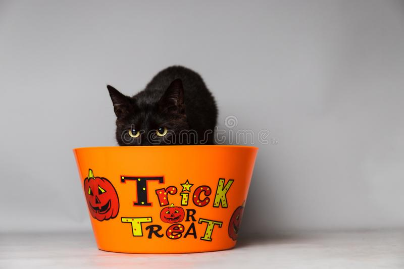 Black cat with green eyes dressed with a jack o lantern head piece against a seamless background behind a trick or treat container. A black cat with green eyes stock photos