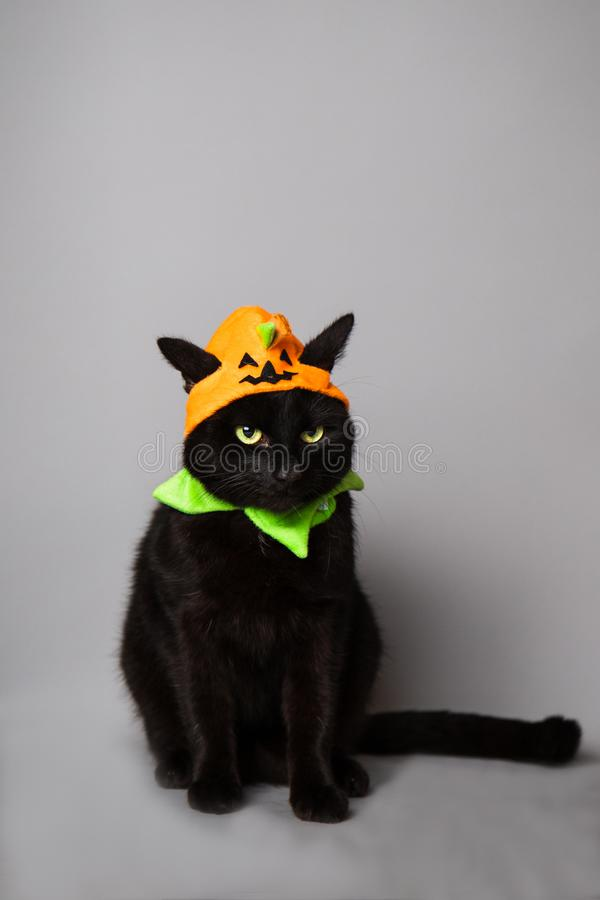 Black cat with green eyes dressed with a jack o lantern head piece royalty free stock images