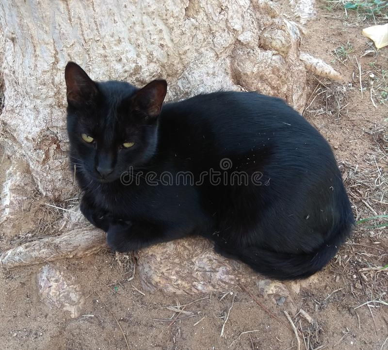 A black cat with green eyes stock photography