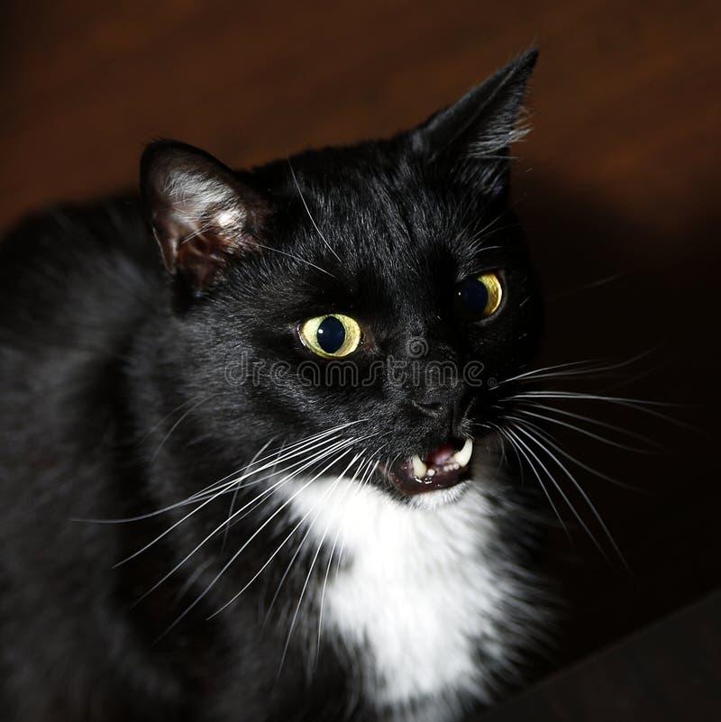 Black cat stock image