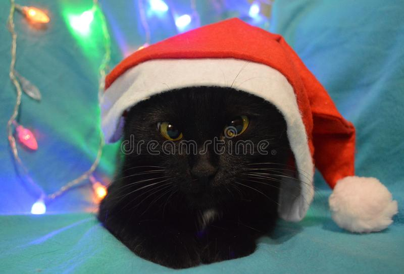 Black cat in a hat of Santa Claus on the background of Christmas lights stock photos