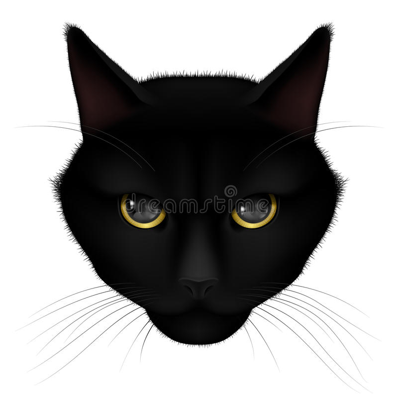 Black cat. Head of black cat on a white background royalty free illustration