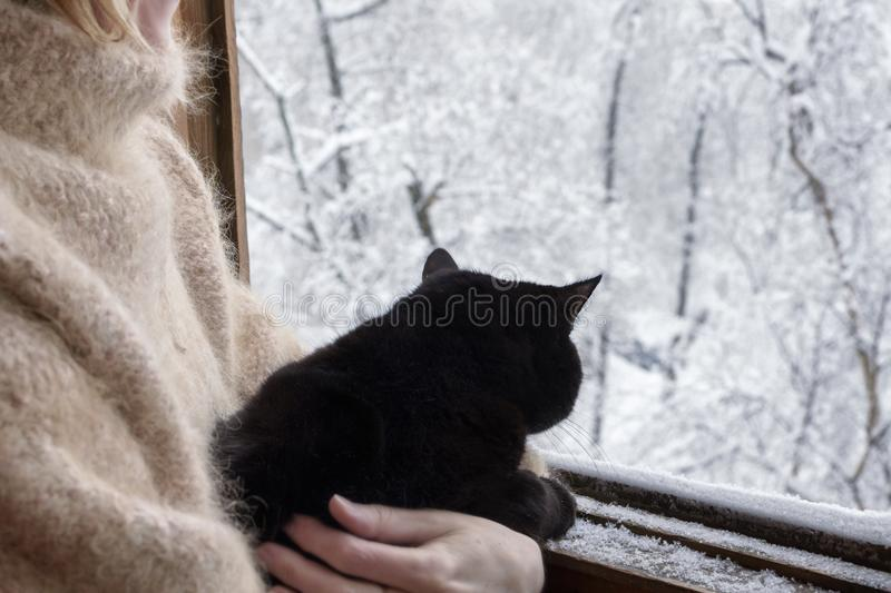Black cat on her hands looking at window stock image