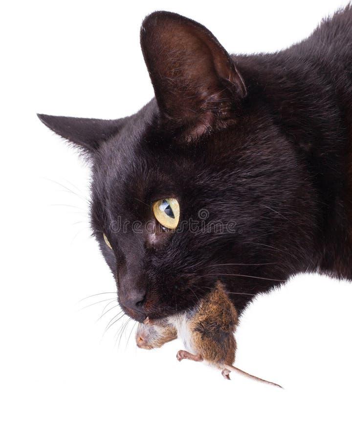 фото черная кошка с мышкой в зубах простоты, можно