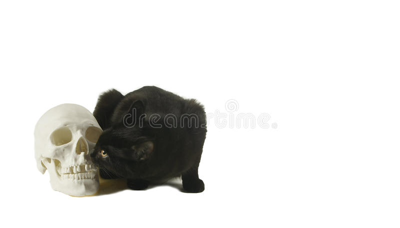 Download Black Cat And A Human Skull Stock Image - Image: 11285133
