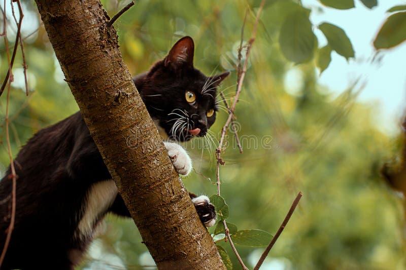 Black cat hunts  on the tree. Black cat hunts birds on the tree royalty free stock image