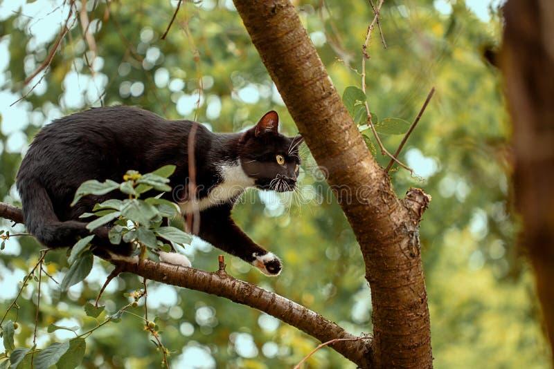 Black cat hunts  on the tree. Black cat hunts birds on the tree stock photo