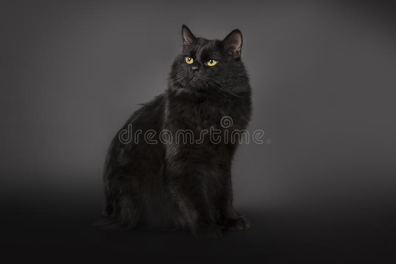 Black cat is isolated a black background stock photography