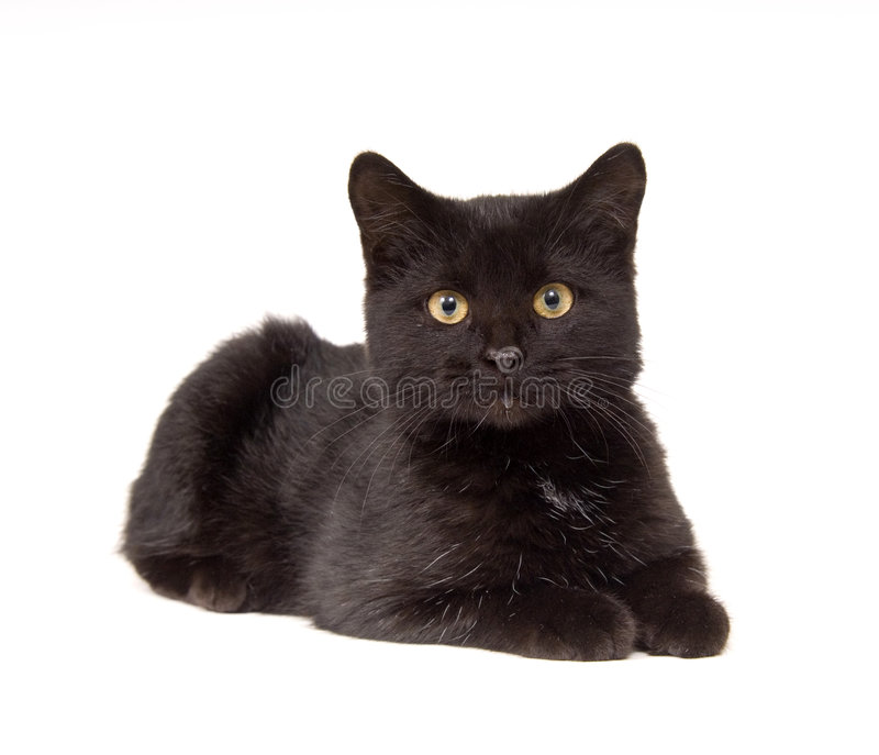 Black cat laying down and looking straight ahead royalty free stock photo
