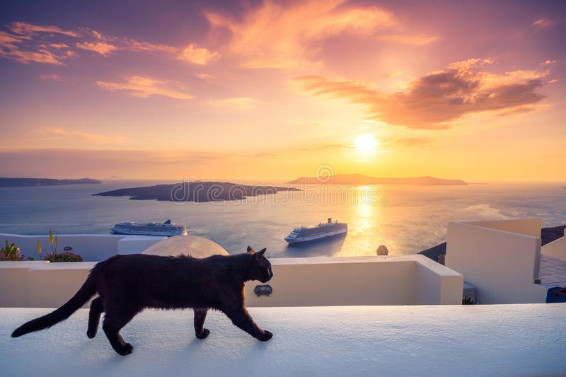 A black cat on a ledge at sunset at Fira town, with view of caldera, volcano and cruise ships, Santorini, Greece. royalty free stock image