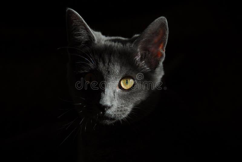 Black Cat Free Public Domain Cc0 Image