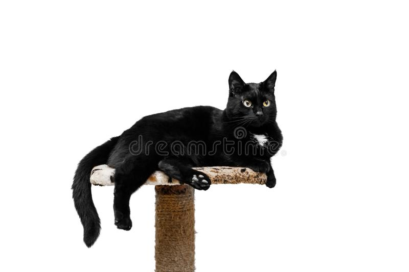 Black cat lies on a cat`s place, white background. Black cat lies on a cat`s place, white background royalty free stock images