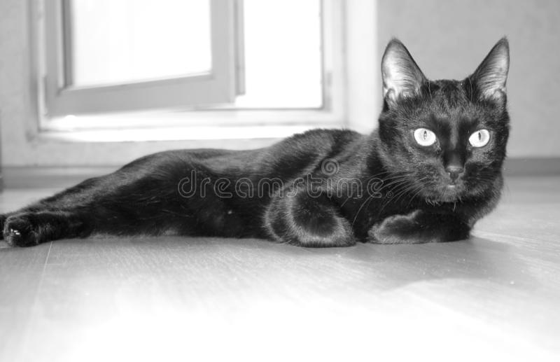 A black cat lies in an empty room. Russian traditions. A black cat lies in an empty room. Russian traditions are the first to let a cat into a new house stock photography