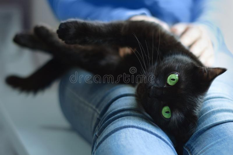 Black cat lies in the hands of the girl. stock photo