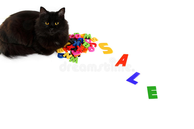 Black cat lies on the letters with the word sale stock photography