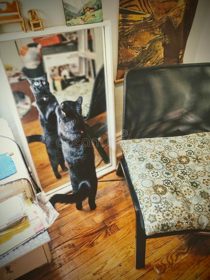 Free Black Cat Looking In Mirror At The `other Side` Of The Glass With Funny Expression Stock Images - 160677244