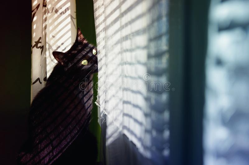 Black cat looking outside through the window blinds. royalty free stock photography