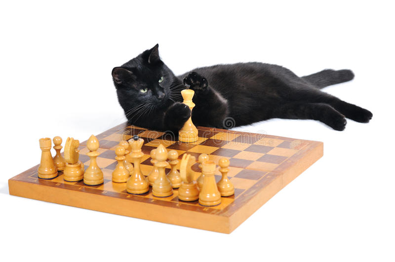Black cat lying on the chessboard playing with figures. Isolated on white background stock photography