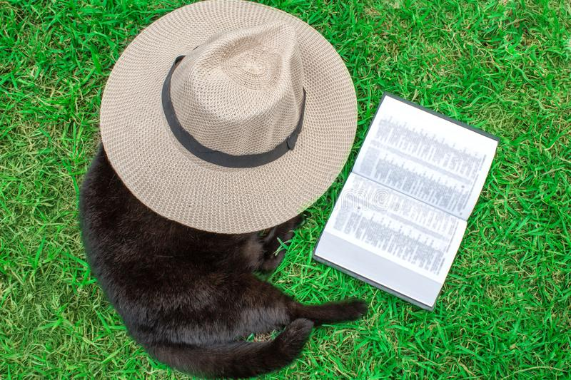 A black cat is lying on the green grass under his hat and a book. stock photography