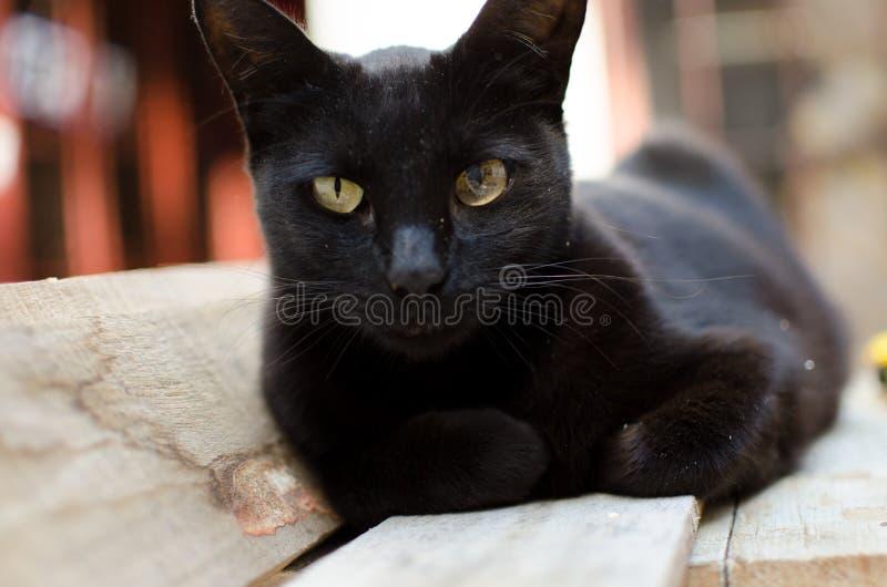 Black cat and woods. Carpenter stock photos