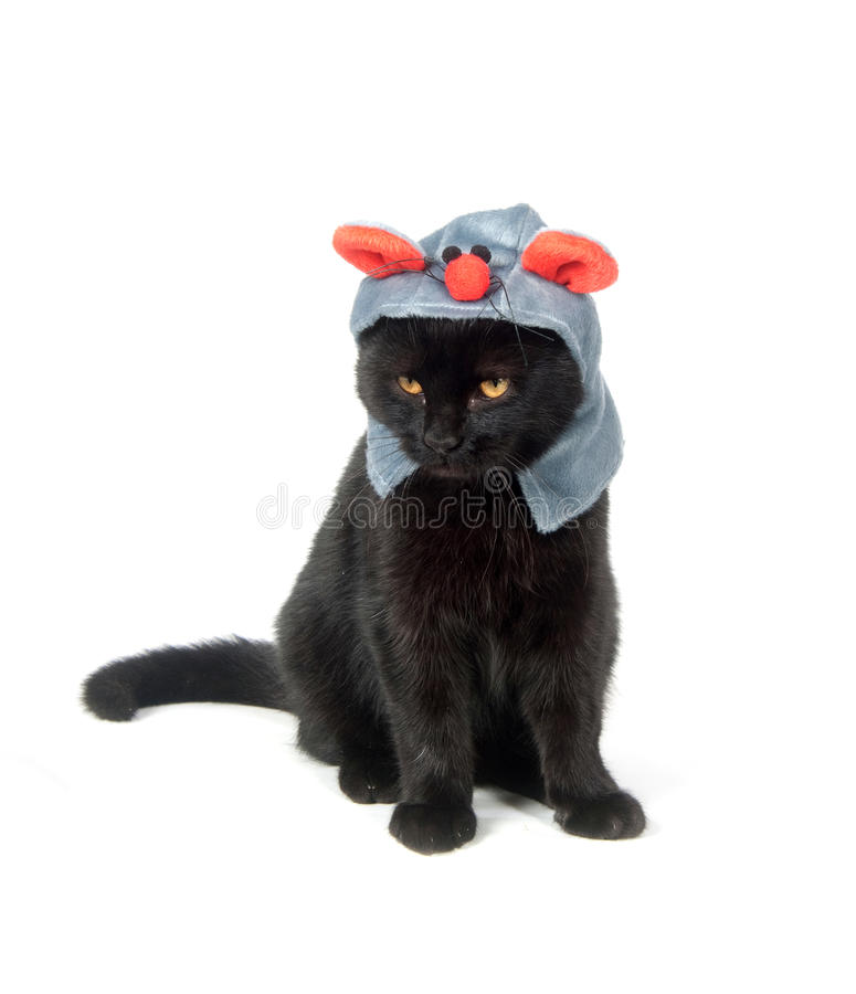 Black cat with mouse hat royalty free stock photos