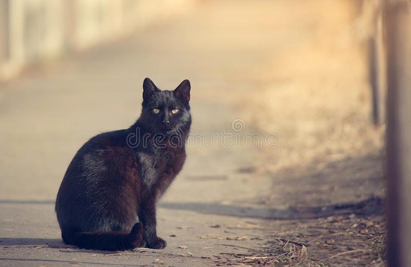 Black cat in the nature stock image