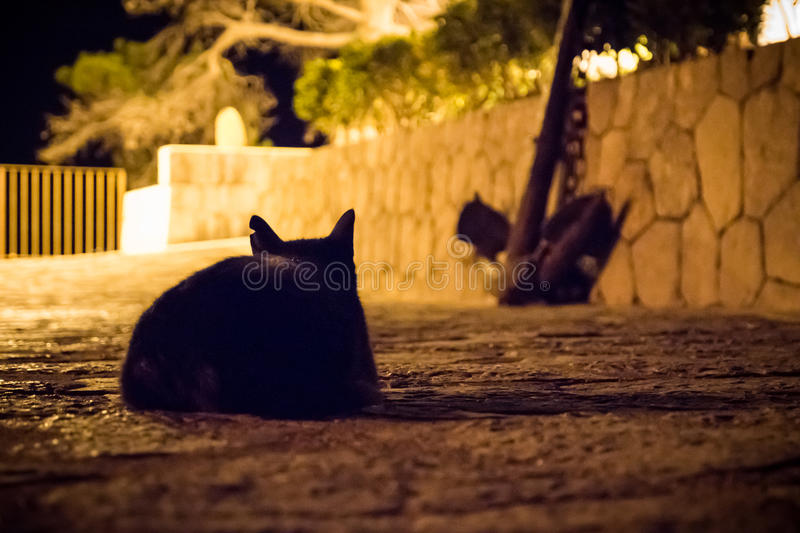 Black cat at night with scar ear watching out. Black cat at night scar ear watching out royalty free stock image