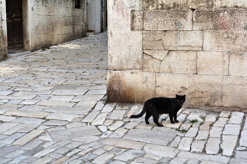 Black cat. In the old town of Rovinj in Croatia royalty free stock images